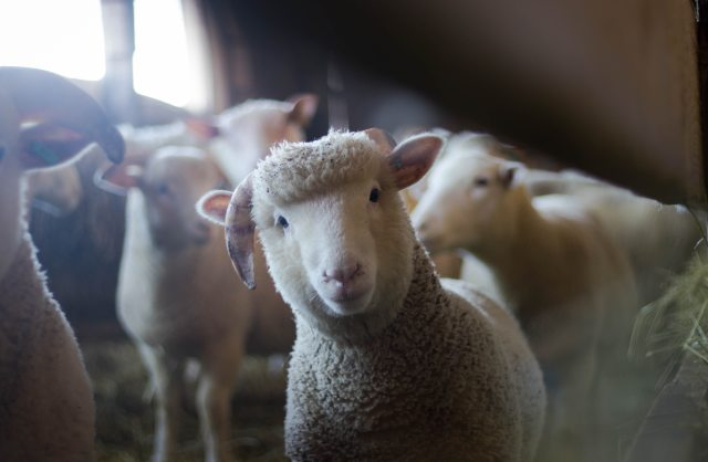 wool.jpg
