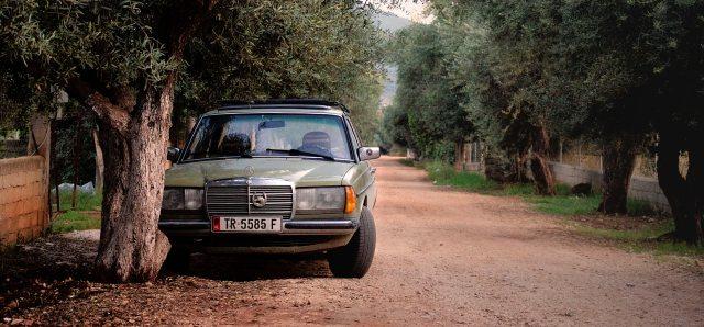 Stalking Mercedes.jpg