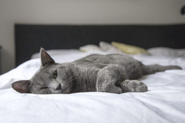 adorable-animal-bed-236606.jpg